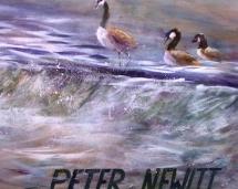 Ducks_on_Boathouse_Row
