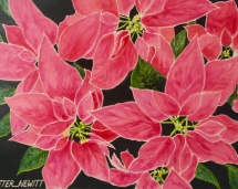 Crimson_Pointsettia