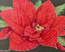 Red_Pointsettia