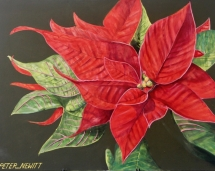 Bold_Red_Pointsettia