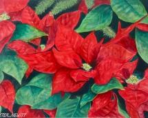 Christmas_Pointsettia