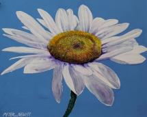 bold-daisy