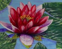 crimson-water-lily
