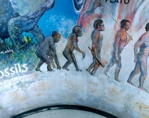 hs_science_mural_evolution
