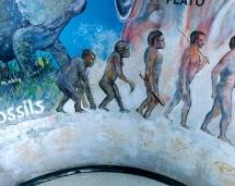hs_science_mural_evolution